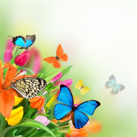 Spring flowers with exotic butterflies  Stock Photo