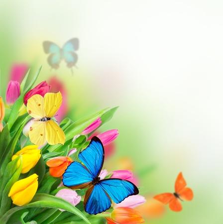exotic butterflies: Flores de primavera con las mariposas ex�ticas