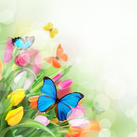 flores exoticas: Flores de primavera con las mariposas exóticas