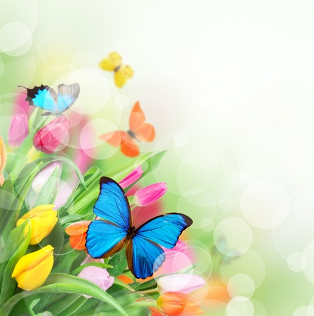 flower petal: Spring flowers with exotic butterflies  Stock Photo