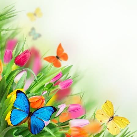exotic butterflies: Flores de primavera con mariposas ex�ticas