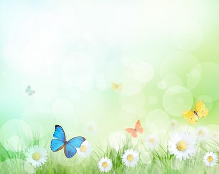 exotic butterflies: Primavera prado con mariposas ex�ticas Foto de archivo