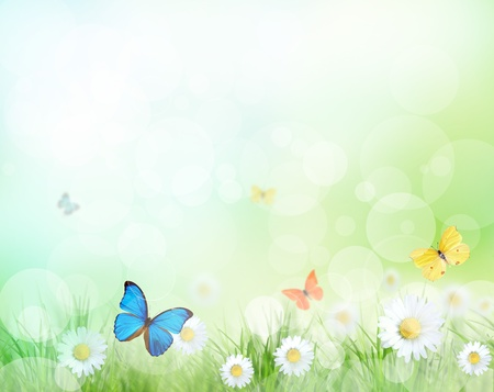 Spring meadow with exotic butterflies  Stock Photo