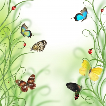 colorful butterfly: Beautiful floral design Stock Photo