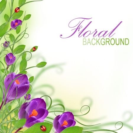 creeper: Beautiful floral design
