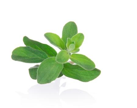 Marjoram Herb (origanum majorana ) isolated over white  photo