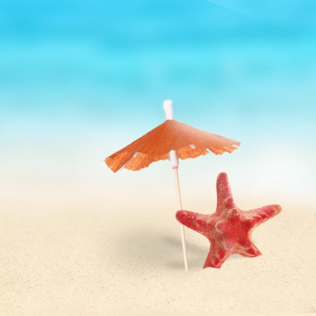 Red Starfishes on the Beach. photo
