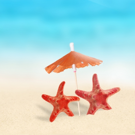 cancun: Red Starfishes on the Beach