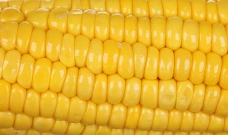 Ear of corn close-up photo