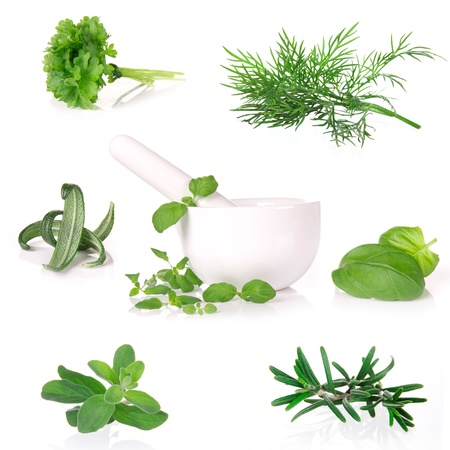 pepper grinder: Fresh herbs collection over white
