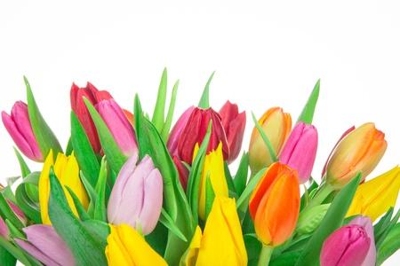 Bos tulpen geïsoleerd op witte achtergrond Stockfoto