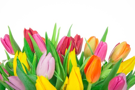 pink tulips: Bunch of tulips isolated on white background