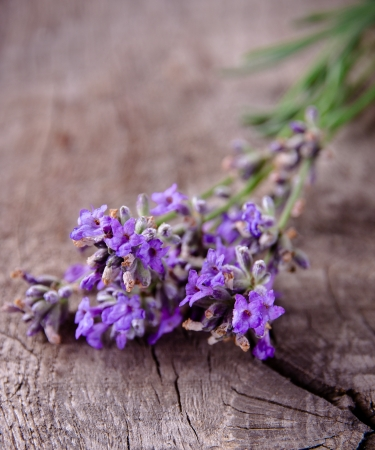 Lavender on wooden background photo