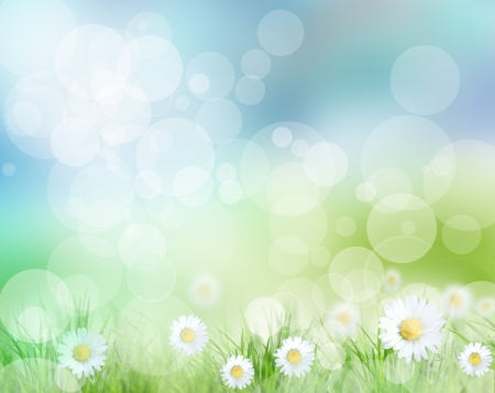 camomile flower: Beautiful spring background