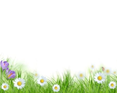 flowers bokeh: Beautiful spring background