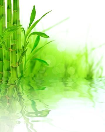japones bambu: Fondo de bambú