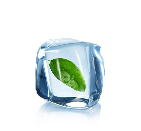 Leaf in Ice cubes over white photo