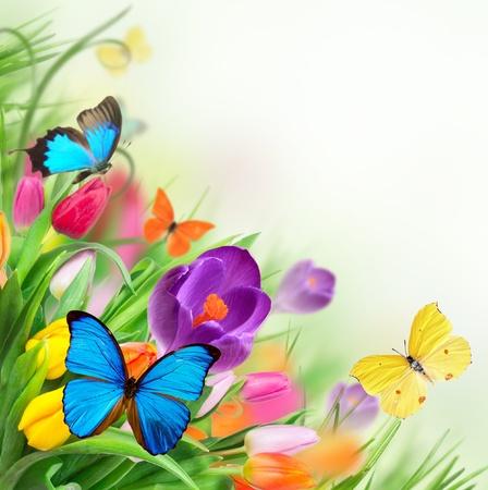 papilio: Floral background