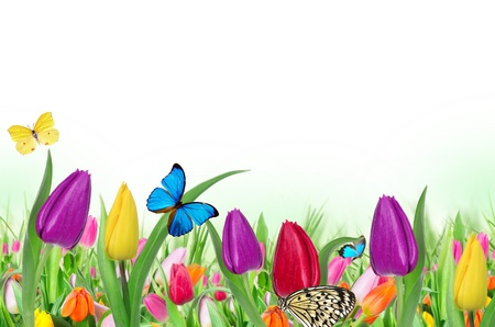 tulipa: Floral background