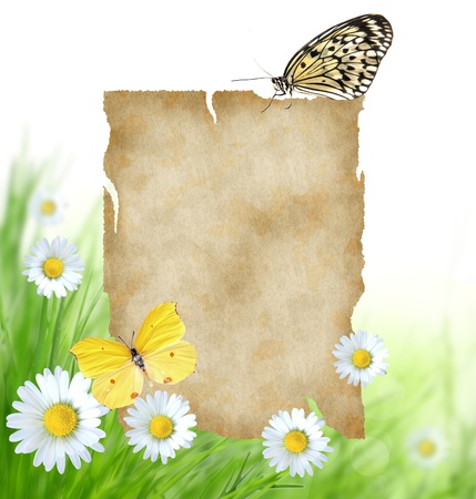 Floral background with blank paper and butterflies  photo