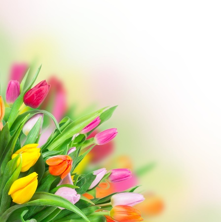 cut flowers: Beautiful floral background