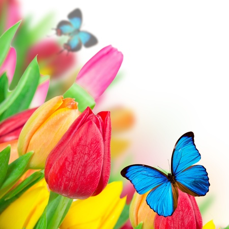 Beautiful floral background photo