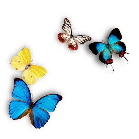 exotic butterflies: Mariposas ex�ticas de m�s de blanco