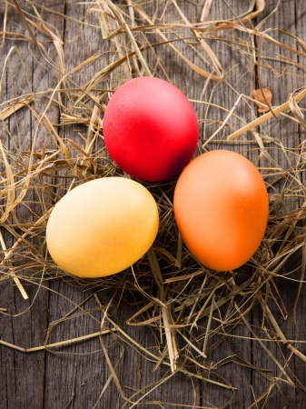 easter nest: Colorful easter eggs