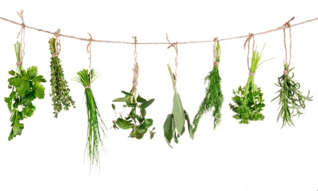 Fresh herbs hanging isolated on white background photo
