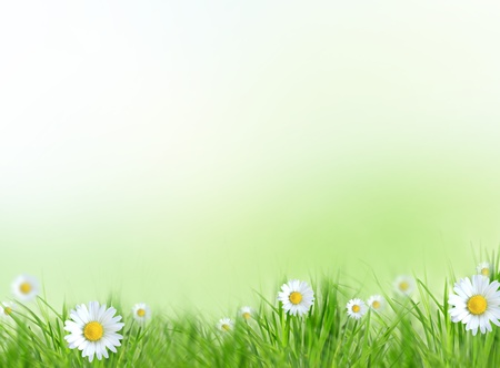 defocus: Spring meadow with daisy flowers Stock Photo