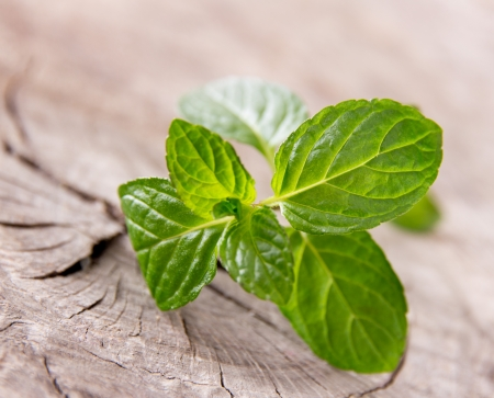 Fresh peppermint on wooden table Stock Photo - 19221679