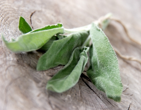 sage: Fresh sage on wooden table Stock Photo