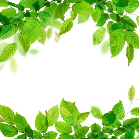 leaf border: Fresh green leaves background texture