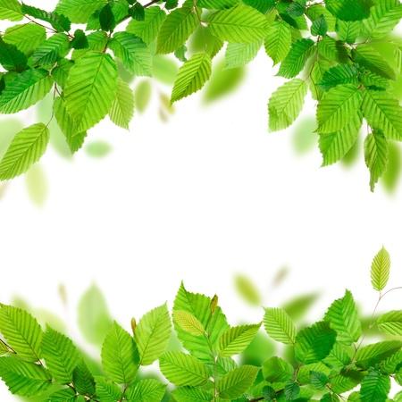 Verse groene bladeren achtergrond textuur Stockfoto