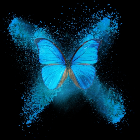 mariposa azul: Resumen de la mariposa con el azul y cian manchas Foto de archivo