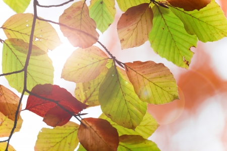 Colored autumn leaves Stock Photo - 22788646