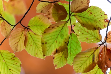 Colored autumn leaves photo