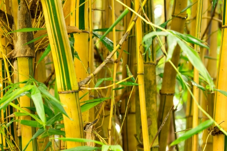 green life: Fresh Bamboo sprouts forest background