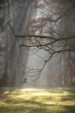 woodland scenery: Forest with morning Fog  Misty and Foggy Forest  Stock Photo