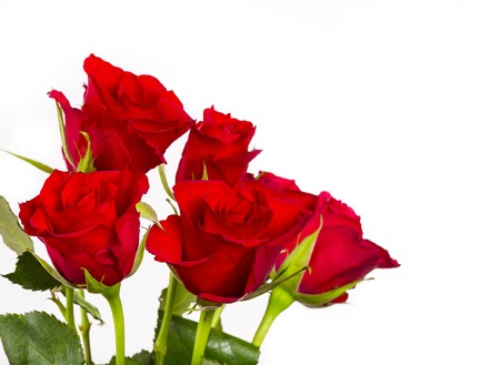 Natural red roses background, close-up  Stock Photo