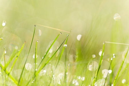 Fresh green grass with water droplet in sunshine Shallow Dof  photo