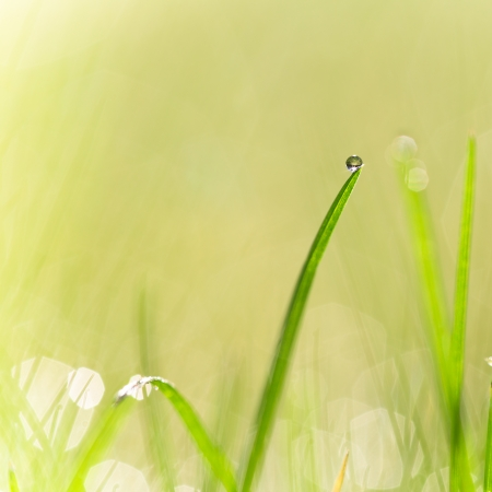 shallow dof: Fresh green grass with water droplet in sunshine Shallow Dof  Stock Photo