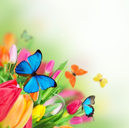 exotics: Beautiful bouquet of colorful tulips flowers with exotics butterfliers  Stock Photo