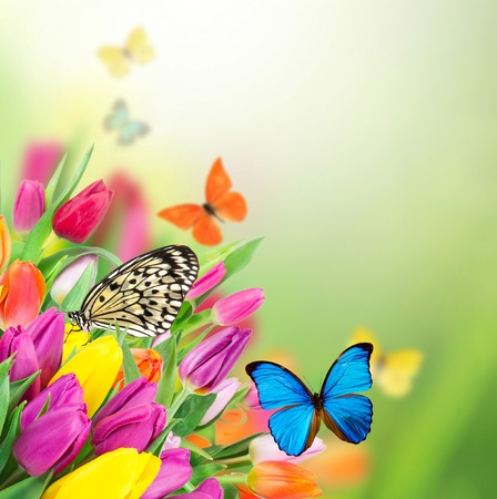 exotics: Beautiful bouquet of colorful flowers with exotics butterflies