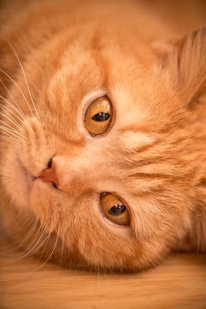 viewfinderchallenge3: Cat close-up