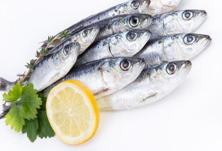 sardinas: Sardinas crudas frescas sobre fondo blanco