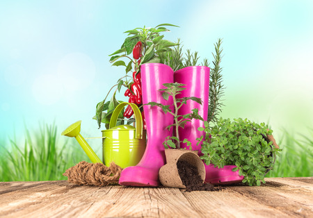 gardening equipment: Outdoor gardening tools and herbs, close-up