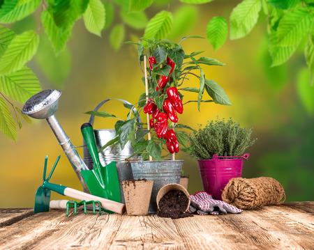 garden tool: Outdoor gardening tools and herbs, close-up