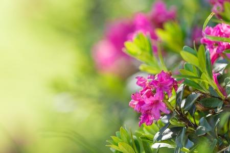 Beautiful flowers background, close-up