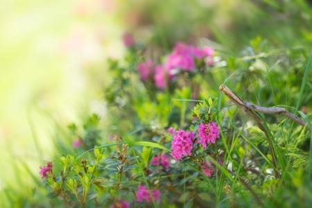 Beautiful flowers background, close-up  photo